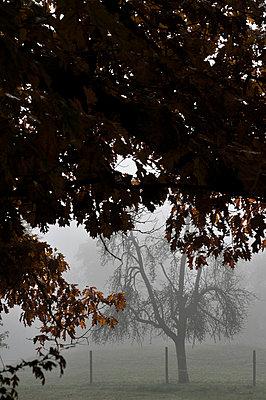 Herbstnebel - p949m902586 von Frauke Schumann