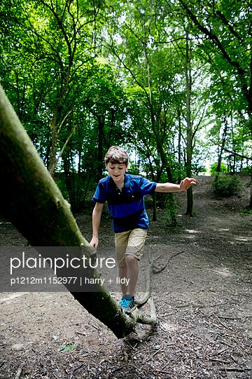 Junge klettert auf einem großen Ast - p1212m1152977 von harry + lidy