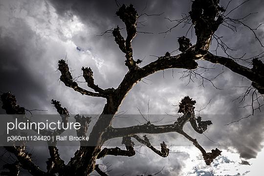 Knorriger Baum - p360m1124420 von Ralf Brocke