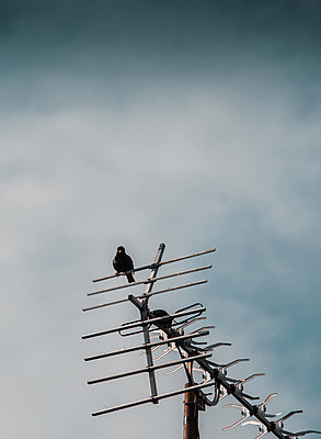 Bird on an antenna - p1681m2283416 by Juan Alfonso Solis