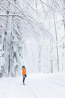 Beautiful winter forest - p454m2071811 by Lubitz + Dorner
