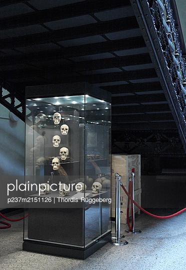 Berlin, Showcase with skulls - p237m2151126 by Thordis Rüggeberg