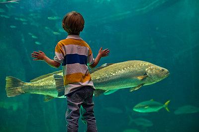 Boy admiring fish in aquarium - p42917179f by Hybrid Images