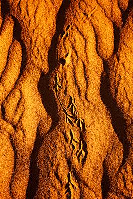 tracks, sand, nature, - p694m811049 by Dana Rose Lee