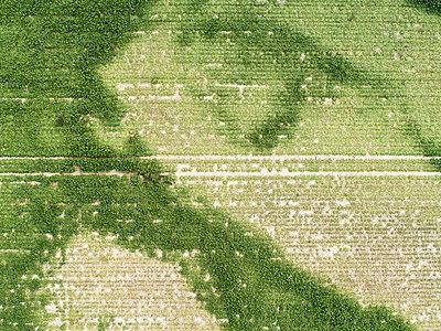 Dürre in Deutschland - p1079m2157720 von Ulrich Mertens