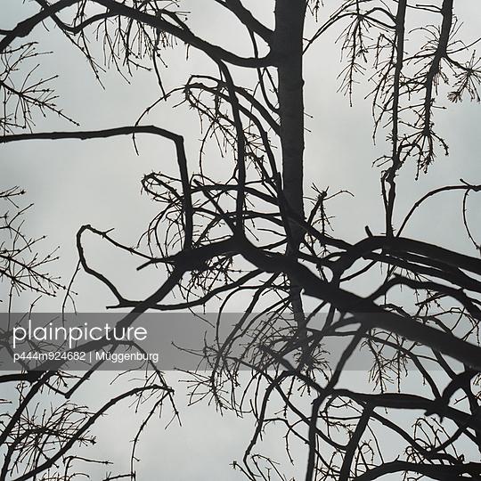 Branches - p444m924682 by Müggenburg