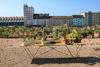 Urban gardening - p417m919529 von Pat Meise