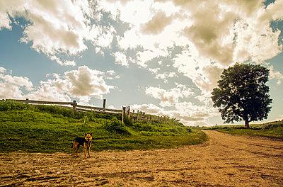 Dog on rural dirt path - p555m1410611 by Aleksander Rubtsov
