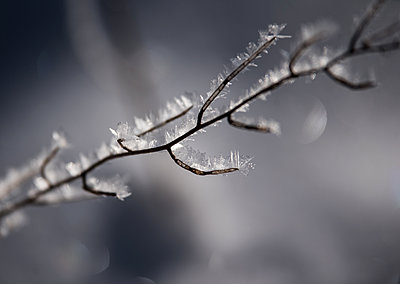 Branches with ice crystals - p1649m2253071 by jankonitzki