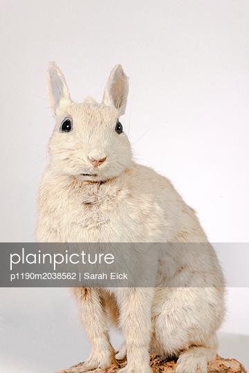 Stuffed hare - p1190m2038562 by Sarah Eick