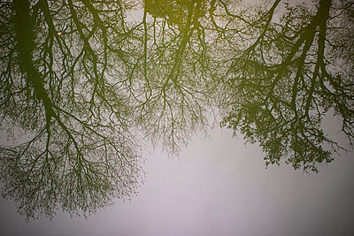 Trees silhouettes - p1007m2092388 by Tilby Vattard