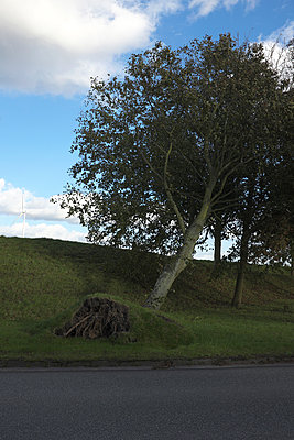 umgestürzter Baum - p116m1502883 von Gianna Schade