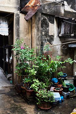 Thailand, Bangkok, plants and scrap outside a run down house - p300m1549591 by Ivan Gener Garcia