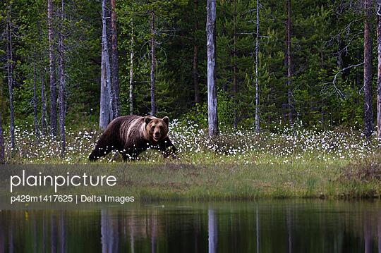 p429m1417625 von Delta Images