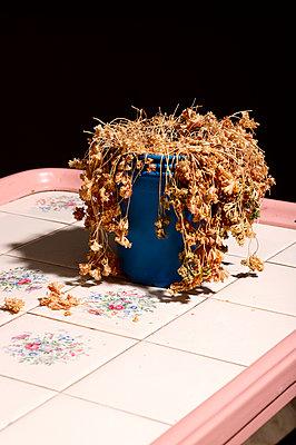 dried flowers - p1043m2278267 by Ralf Grossek