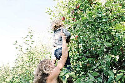 Apple picking with mom at the orchard. - p1166m2151869 by Cavan Images