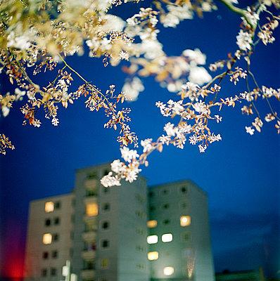 Frühling in Bielefeld - p6060225 von Iris Friedrich