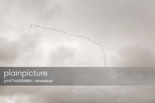 Zugvögel in Formation - p1477m2038983 von rainandsalt