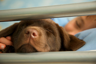Boy and chocolate lab - p6690248 by Jutta Klee photography