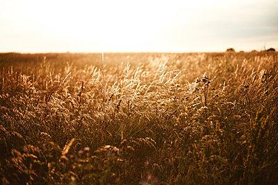 Wildwiese - p1006m1441798 von Danel