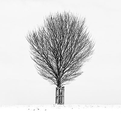 Tree in snowy landscape - p1256m2099741 by Sandra Jordan