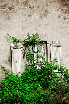Überwuchertes Fenster - p248m933233 von BY