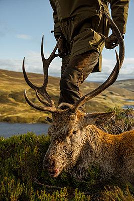 Hunter with deer - p312m2052050 by Hans Berggren