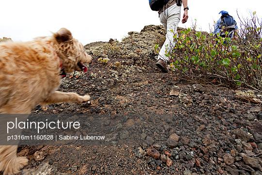 Wanderer mit Hund in Vulkanlandschaft, Lanzarote, Kanarische Inseln, Spanien, Europa - p1316m1160528 von Sabine Lubenow