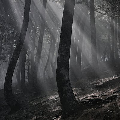 Mystical forest - p1137m939527 by Yann Grancher