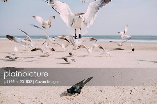 p1166m1231532 von Cavan Images