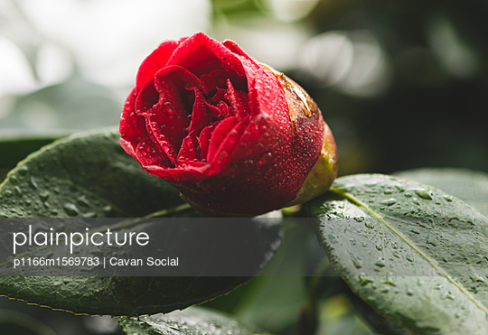 p1166m1569783 von Cavan Social