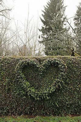 Hecke mit Herz bei Frost - p470m1004927 von Ingrid Michel