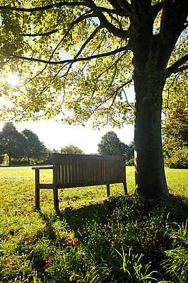 Empty bench next to a tree - p1047m814780 by Sally Mundy