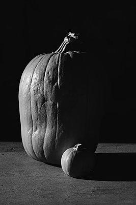 Pumpkin Still Life - p1262m1184868 by Maryanne Gobble