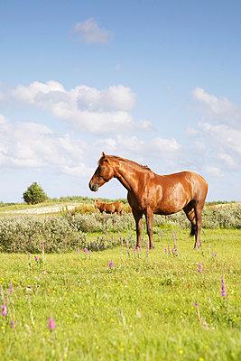 Pferdeparadies - p606m890798 von Iris Friedrich