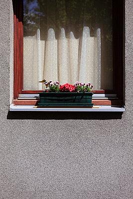 Balcony plant - p045m1028370 by Jasmin Sander