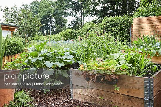 Garden with raised beds - p113m2292048 by Lioba Schneider