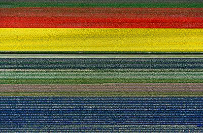 p1120m1181707 von Siebe Swart