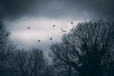 Birds of prey hovering over treetops at twilight - p1681m2283680 by Juan Alfonso Solis