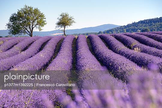 p1377m1392225 von Francesco Carovillano