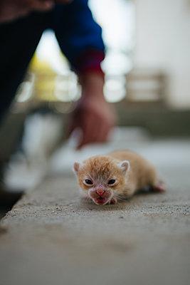 Portrait of a little cat. - p1166m2190817 by Cavan Images