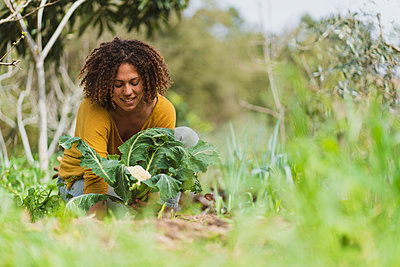 Smiling curly haired Woman picking cauliflower in garden - p300m2268070 by Steve Brookland