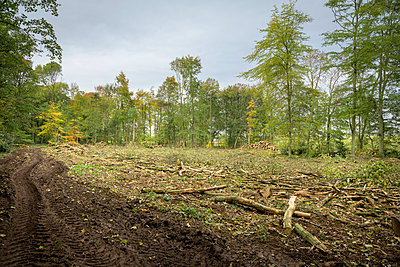 Cleared and cut woodland in sustainable forest - p924m2271177 by Monty Rakusen