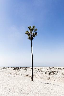 Palme am Strand - p1094m2057258 von Patrick Strattner
