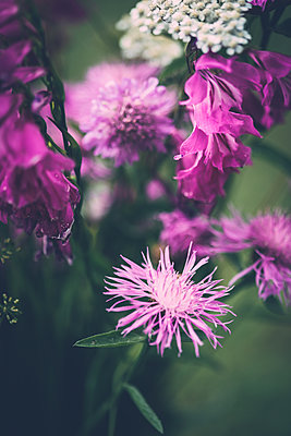 Flowers growing in garden  - p970m2073352 by KATYA EVDOKIMOVA