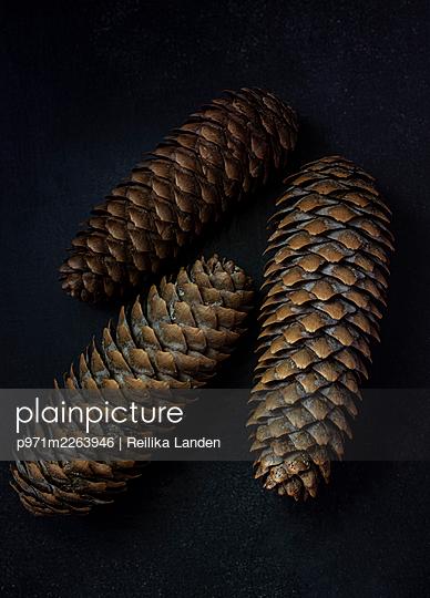 Fir cones - p971m2263946 by Reilika Landen