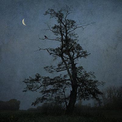 At Night - p1633m2208872 by Bernd Webler