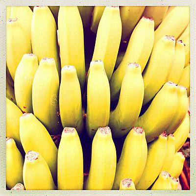 Organically grown banana fruit (Musa paradisiaca) on a perennial, Puerto de Naos, La Palma, Canary Islands, Spain - p300m1008620f by Arthur Selbach