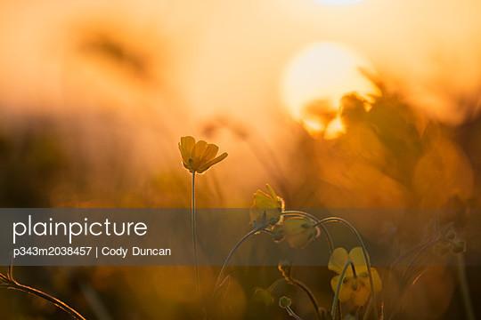 p343m2038457 von Cody Duncan
