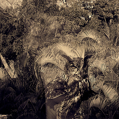 Walking through Jungle with Falling Houses - p1636m2216229 by Raina Anderson